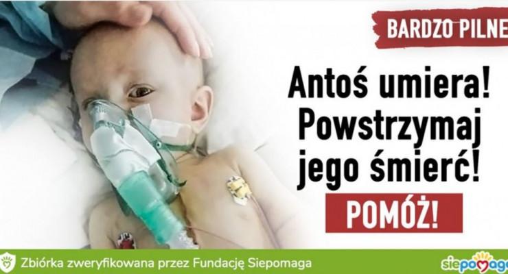 Pomóżmy uratować Antosia